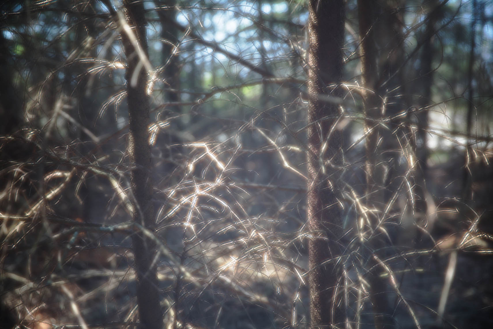 Diffractions_Maine-15