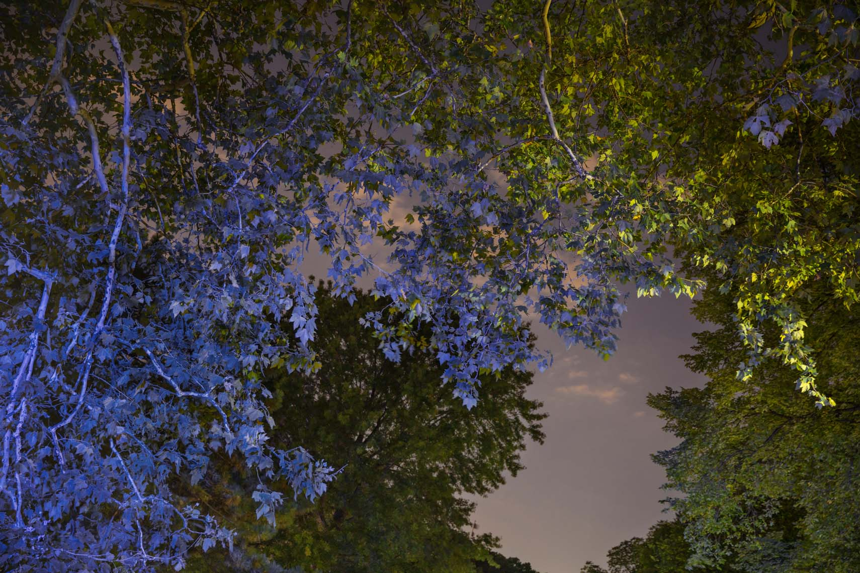 Night Trees 110th Street-2