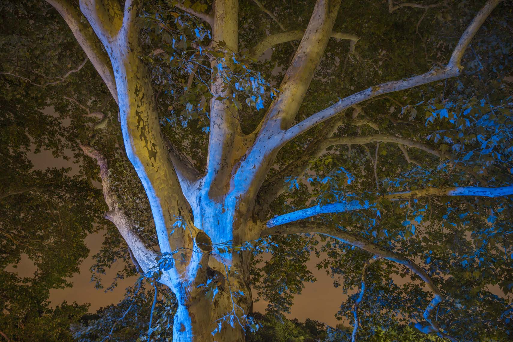 Night Trees 110th Street-3