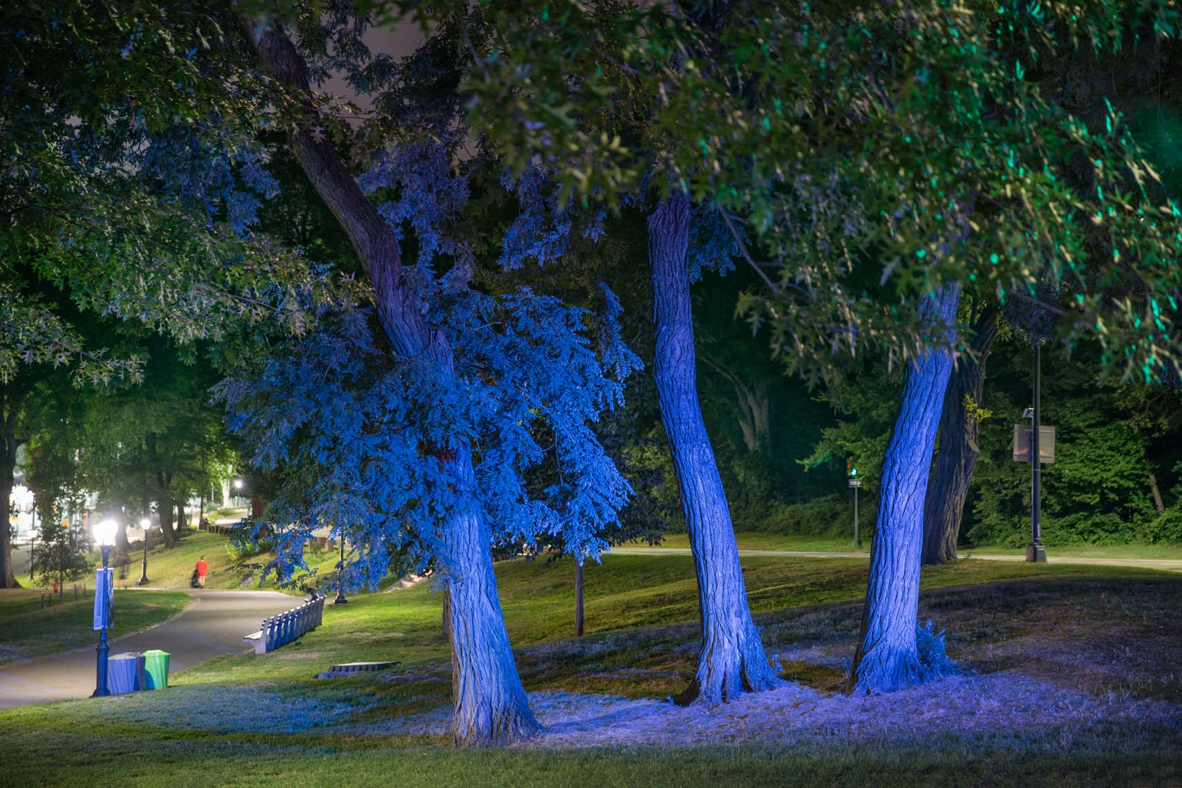 Night Trees 110th Street-7
