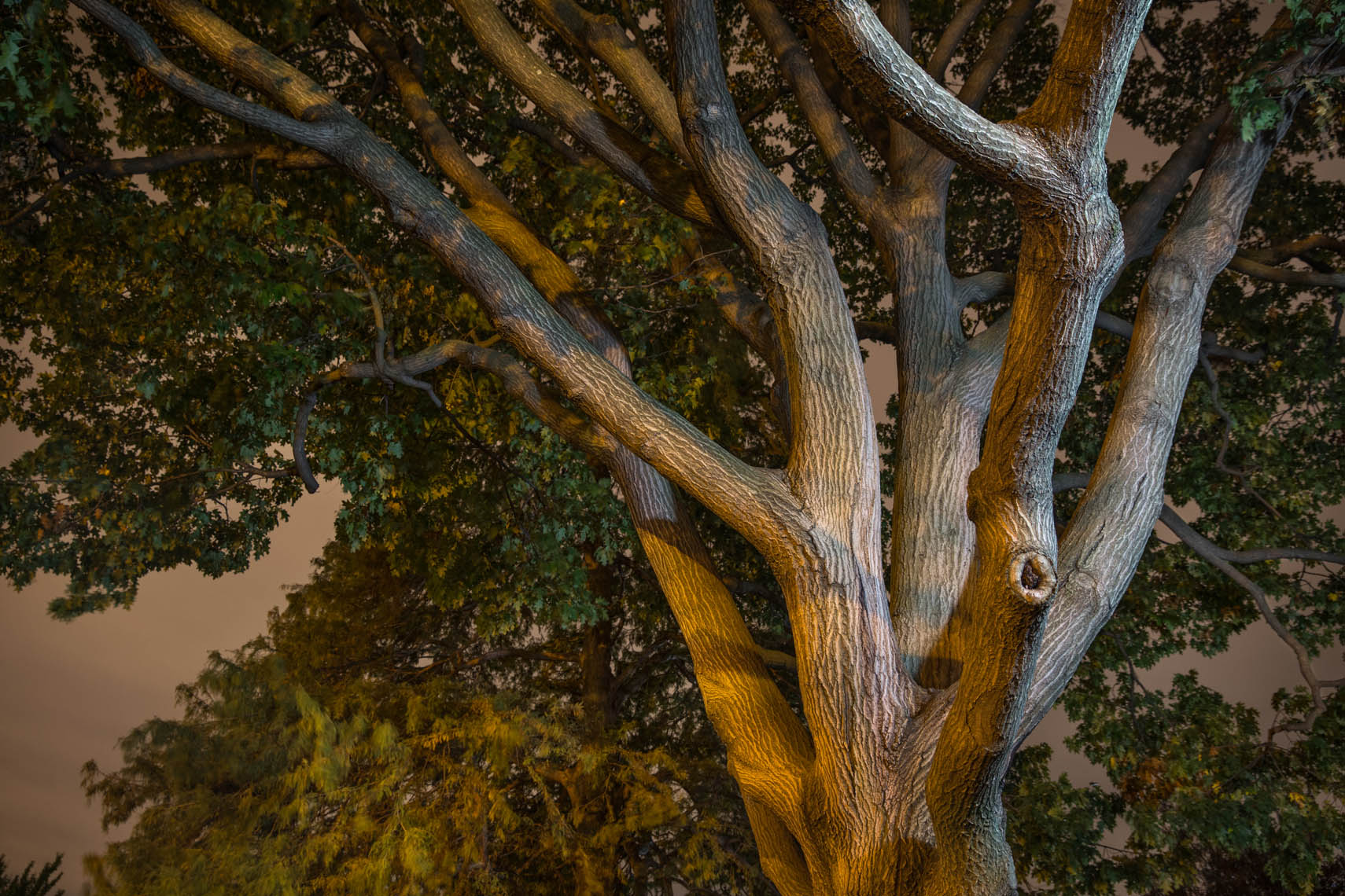 Night Trees DC-2