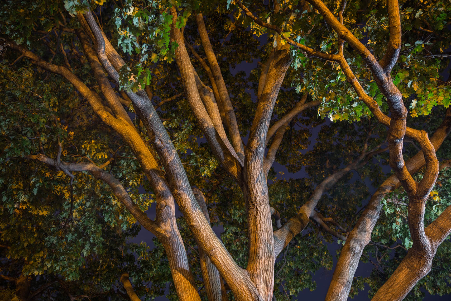 Night Trees DC-22