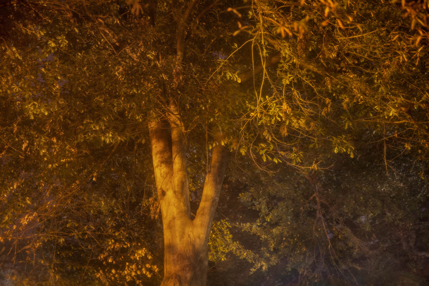 Night Trees DC-23