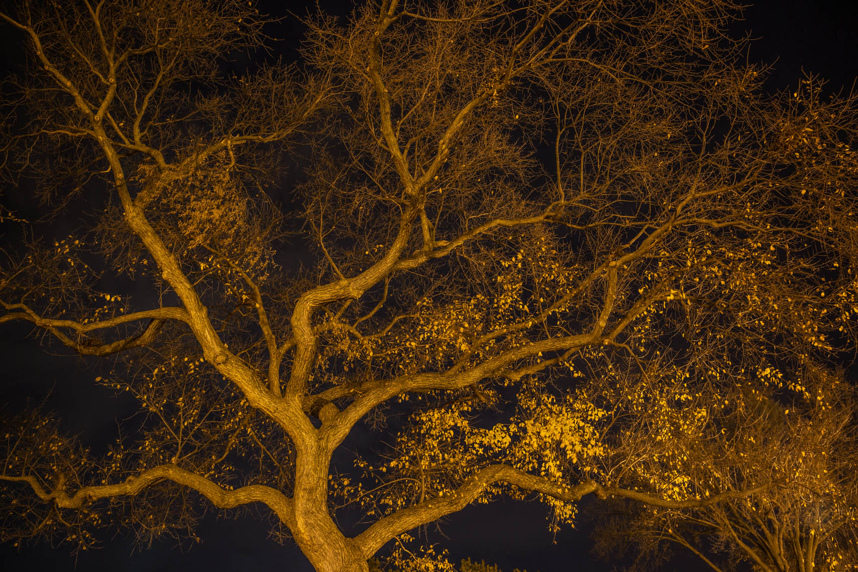 Night Trees DC-32