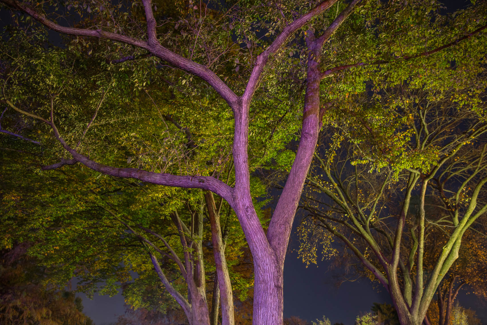 Night Trees DC-36