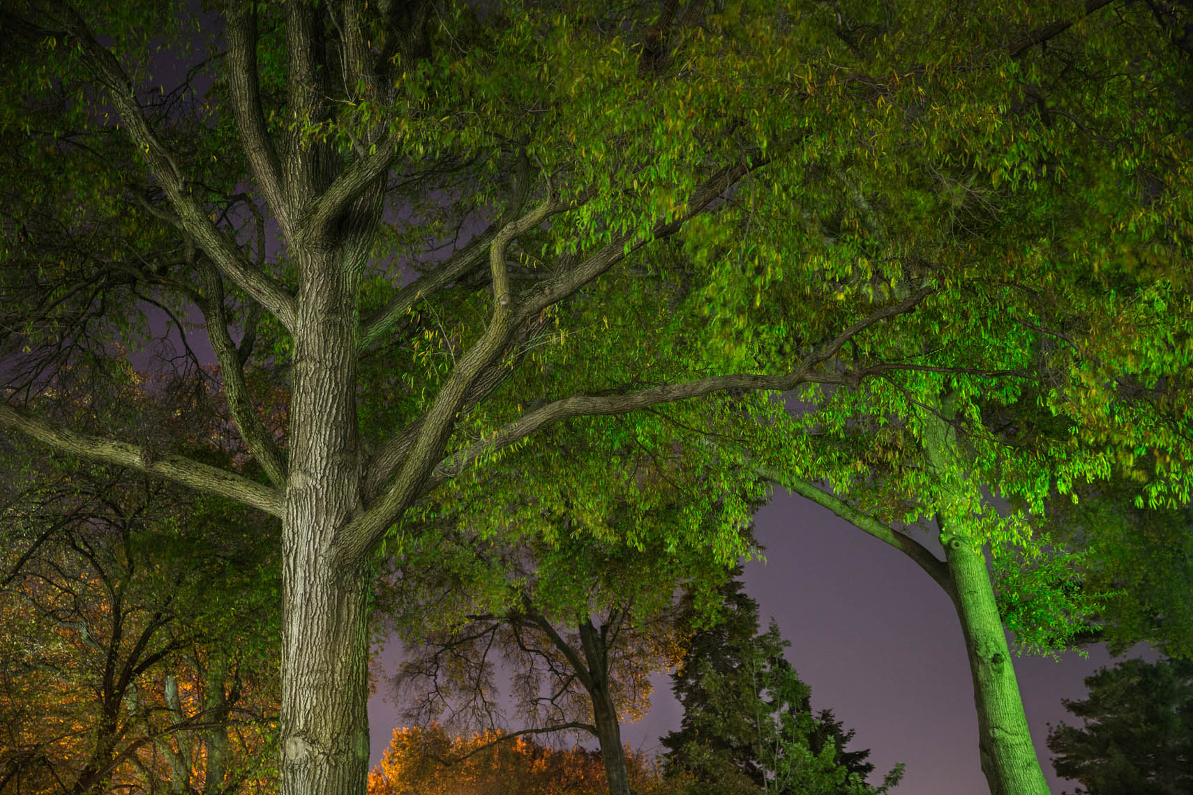 Night Trees DC-42