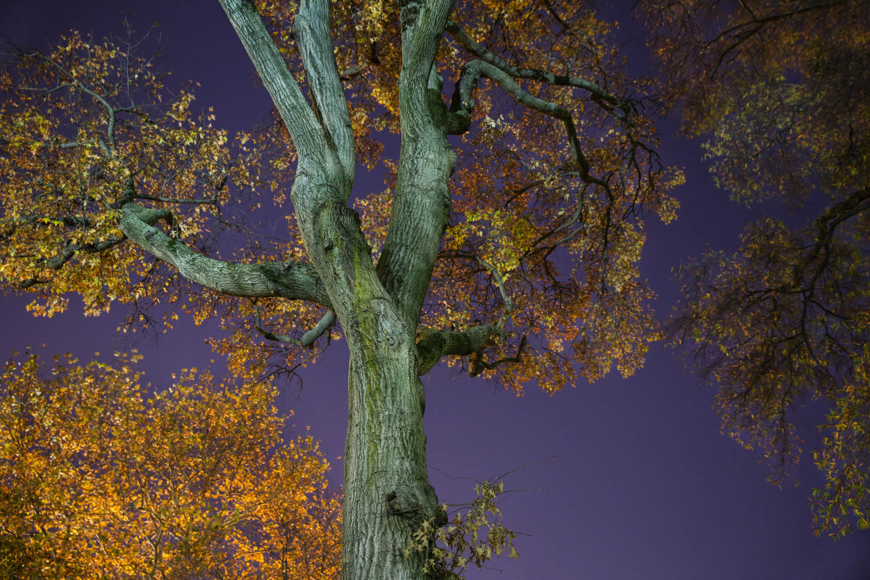 Night Trees DC-43