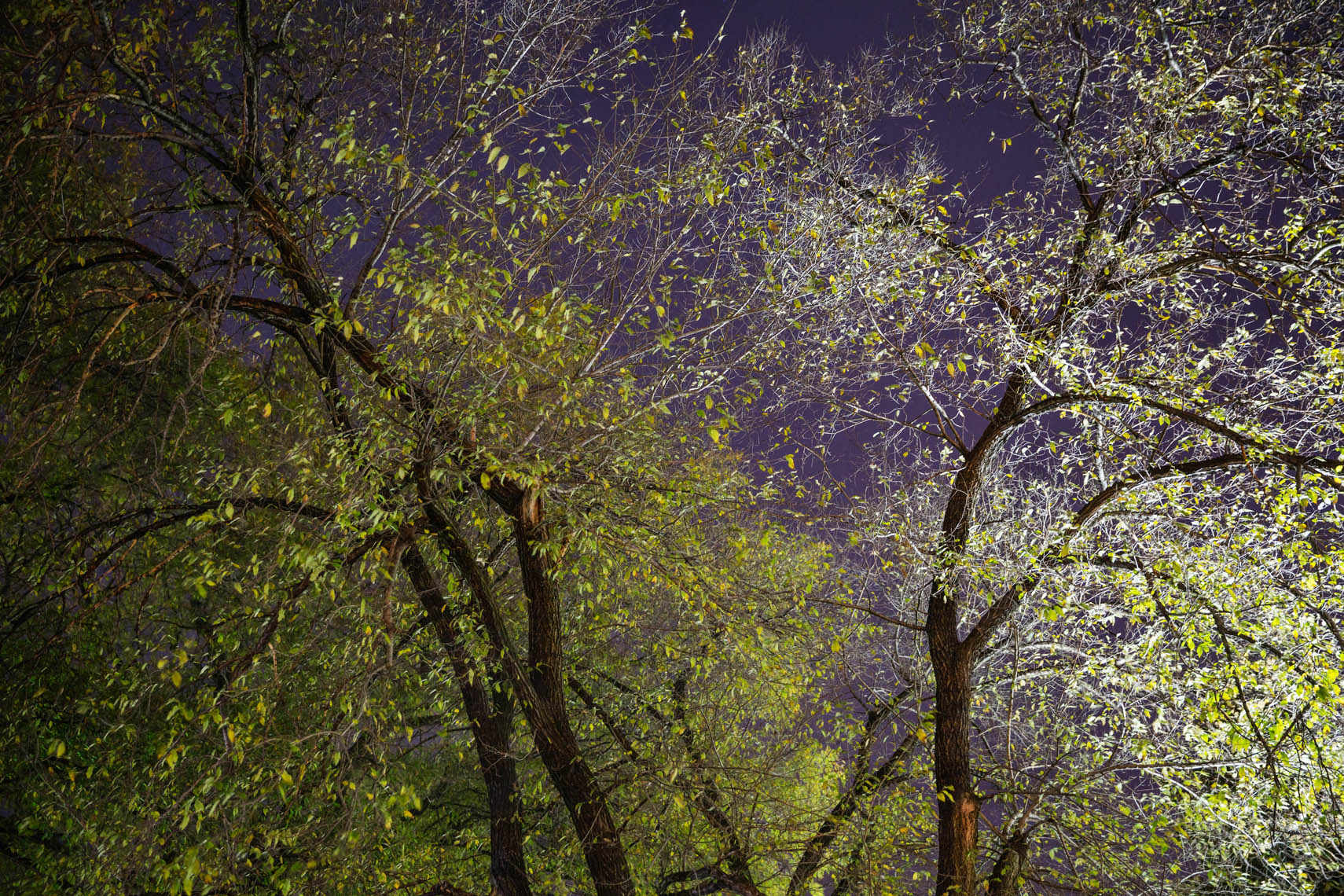 Night Trees DC-44