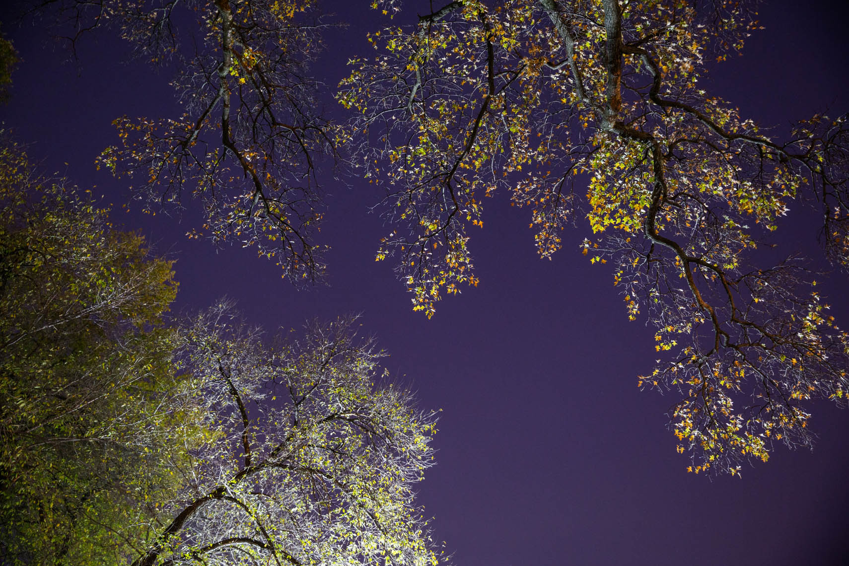 Night Trees DC-45